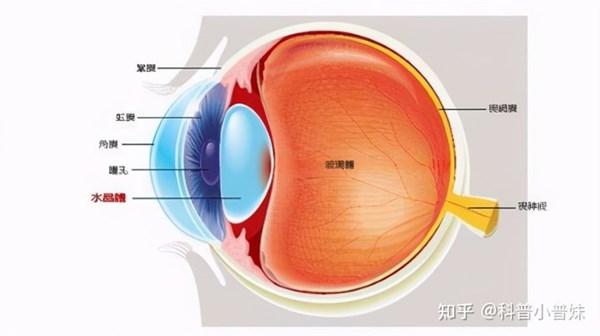 高雄眼科權威醫師